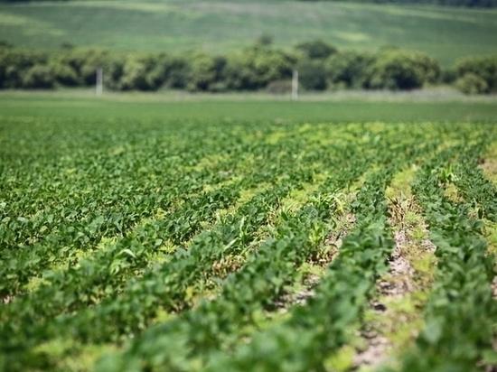 ВПриморском крае засеяли соей практически 267 тыс. гектаров земли