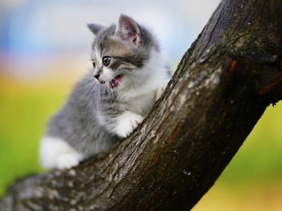 В Ульяновске спасатели сняли котенка с дерева