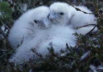 ПОРА: экологическое воспитание в школах Арктической зоны диктует время