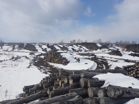 «Китайские инвесторы» работающие в Томской области якобы хронически убыточны