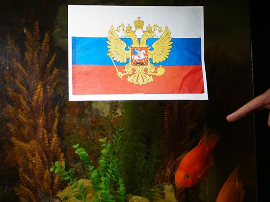 Оракула, который отказался предсказать успех российской сборной, едва не зажарили