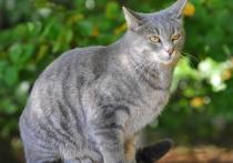 В Михайловске спасатели вернули хозяйке застрявшего в кондиционере кота