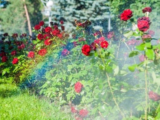 В Волгограде появится 20 тысяч погонных метров поливочного водопровода