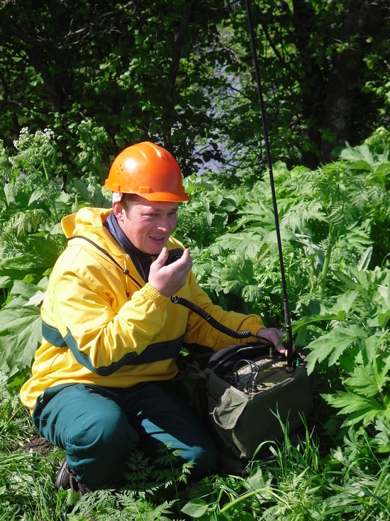 Лесам обеспечили надёжную защиту