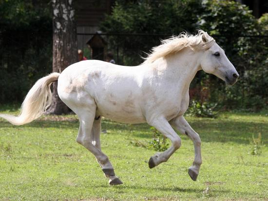 Приехавший на коне камчатский депутат получил повестку в суд