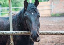 Кемеровчанина наказали за разбой в конном клубе