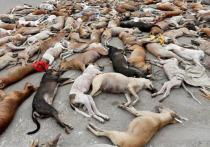 Немецкие СМИ разоблачили фотографию с убитыми перед ЧМ-2018 собаками