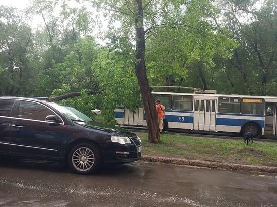 В Самаре дерево упало на троллейбус
