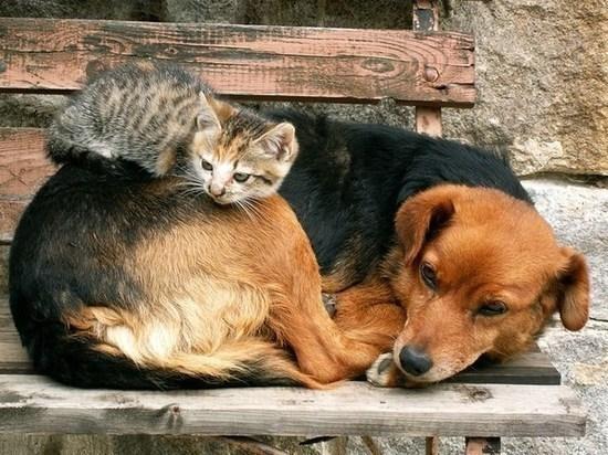 В Самаре построят новый приют для бездомных животных