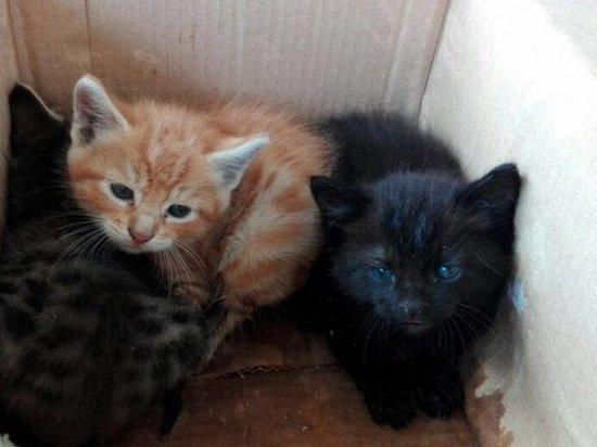 Маленьких котят не пожалел приморский живодер