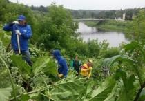В Тверской области чиновники напали на борщевик