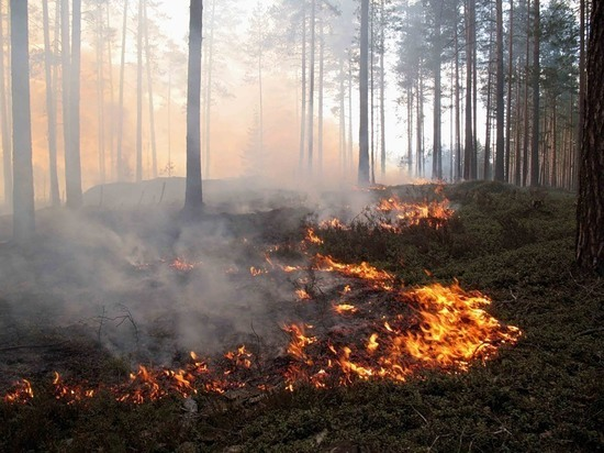 Пожароопасно: костромичей призвали не жечь костры и не бросать окурки в лесу