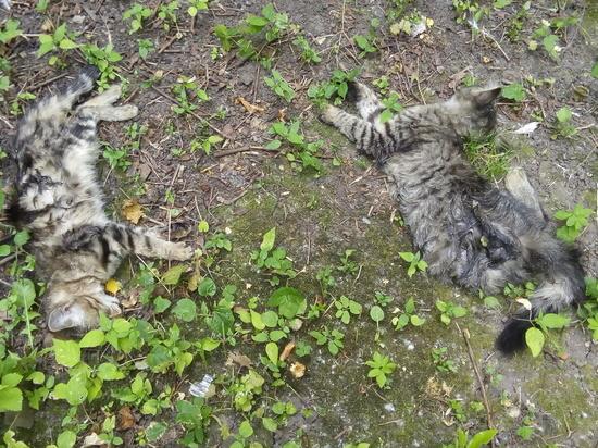В Москве возбуждено дело против владельца собак, задравших двух котов