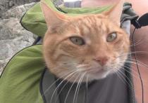 Кот в мешке: загадки и открытия в походе по Голицынской тропе