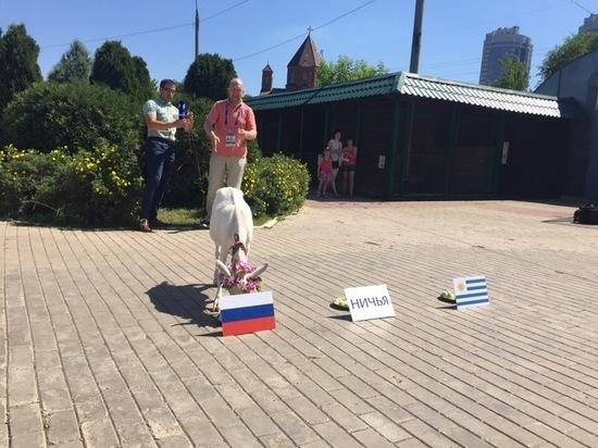 Коза Забияка предсказала победу российской сборной в матче с Уругваем
