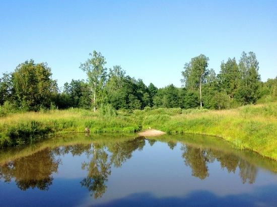 В Самарской области в пруду утонул мужчина