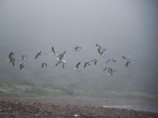 Дождливая погода нагрянет в Приморский край