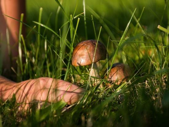 Вслед за валежником россиянам позволят собирать ягоды и грибы