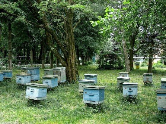 В Мордовии пчел мучили жаждой