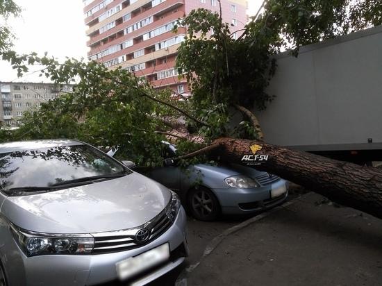 Во время сильного ветра с грозой в Новосибирске начали падать деревья