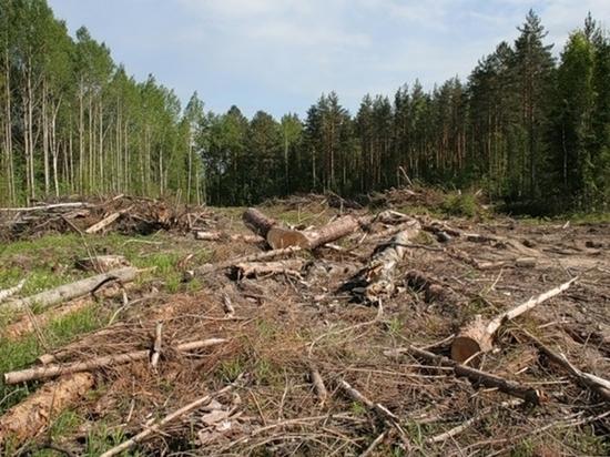 На месте незаконных вырубок омского леса появится урочище «Екатерининское»