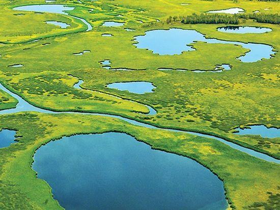 У Томской области «забрали» Васюганское болото