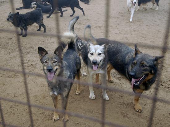 Злостных алименщиков заставили убирать за собаками отходы их жизнедеятельности