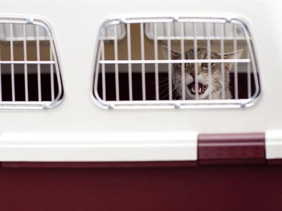 Новые правила перевозки животных в поезде: теперь хозяин не потребуется