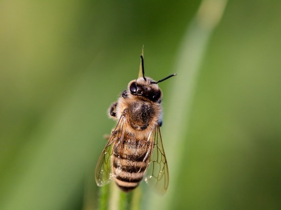 России грозит голод: массовое вымирание пчел ужаснуло экспертов