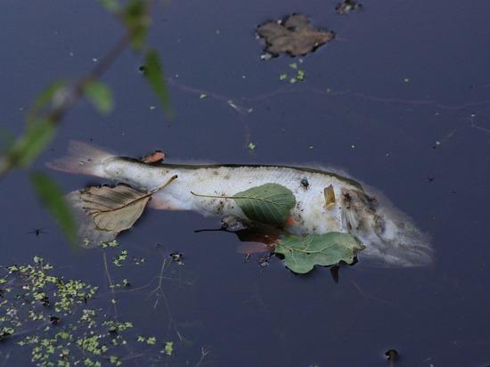 Экологи выяснили причину массовой гибели рыбы на Чистых прудах