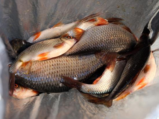 Росрыболовство готовит открытие магазинов с дешевой рыбой