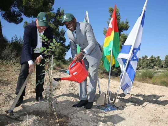Министр иностранных дел Того посадил дерево в Израиле