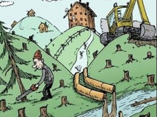 Чрезмерно рачительный чиновник из Шенкурска уничтожил лес ради исполнения задания