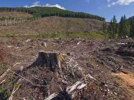 Томская область не имеет от продаж леса  почти ничего, доля в бюджете - 0,3%