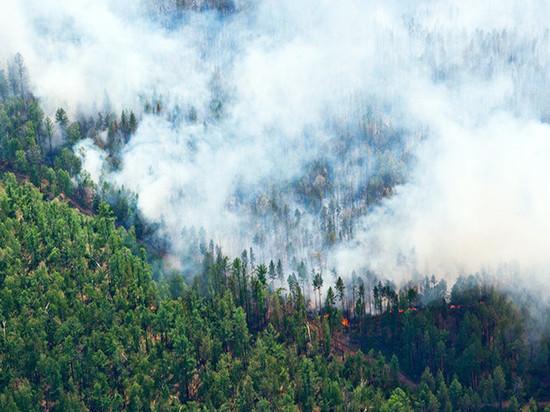 В крае массово горят леса