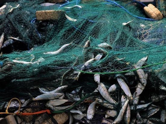 """""""Рыбная отрасль страны оказалась на грани инвестиционного провала"""""""