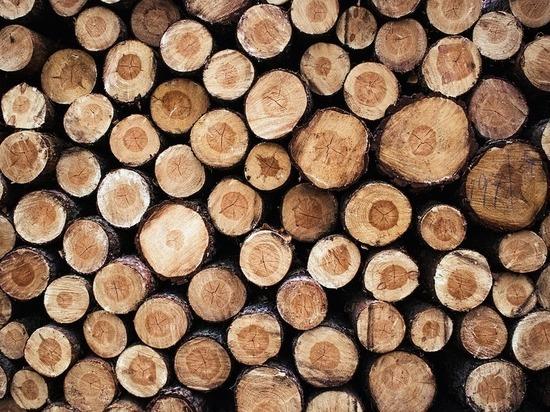 В Бондарском районе незаконно вырубают деревья