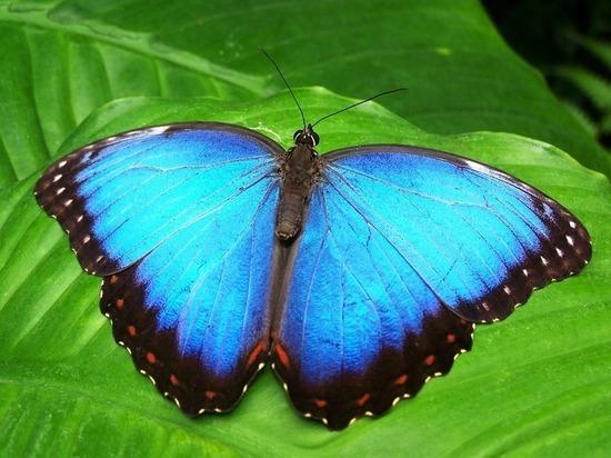 Уникальная выставка живых бабочек открывается в Петрозаводске