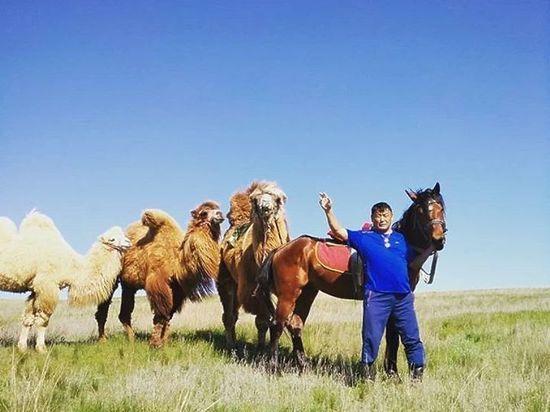 По улицам Элисты гуляют верблюды