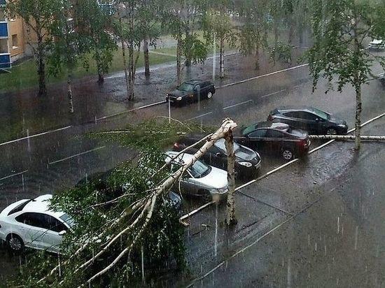 В Мордовии во время урагана деревьями завалило двух дачниц