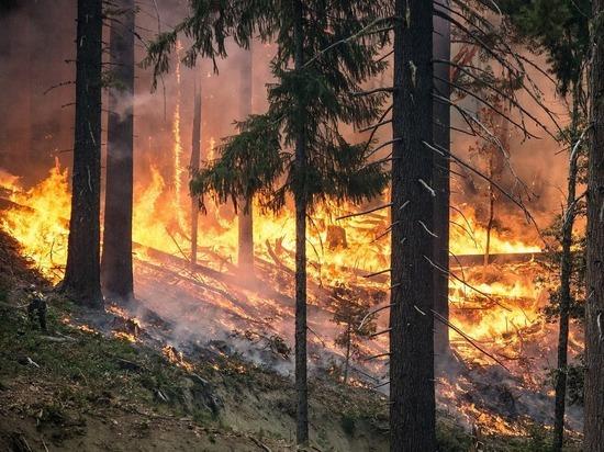 От ударов молнии за сутки случились два пожара в Алтайском крае