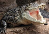 Туристов манят в Коломну селфи с крокодилом