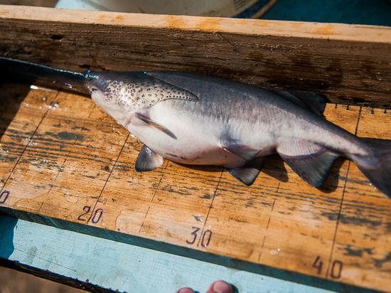 Астраханцам и туристам предлагают «бережную» рыбалку