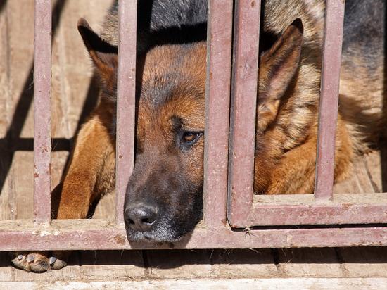 В МВД решили бороться с худобой служебных собак: тузикам доложат мяса