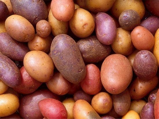 Картошка с зеленым пятном: утвержден стандарт на овощи для окрошки