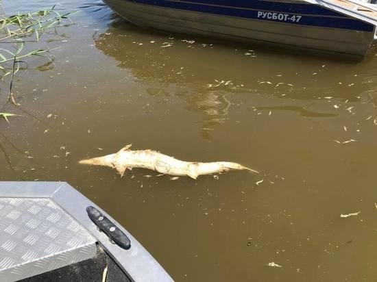 Волгоградцев обвиняют в смерти астраханской рыбы