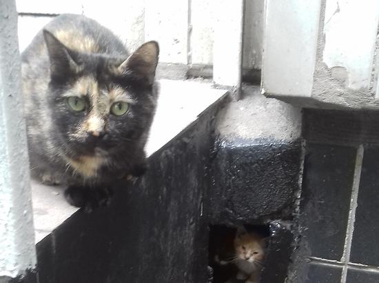 Кошек замуровали в подвале: