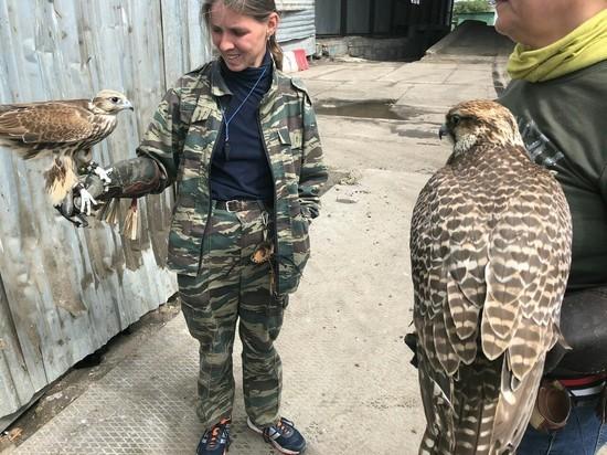 В Петербурге соколов наняли охранять мусор