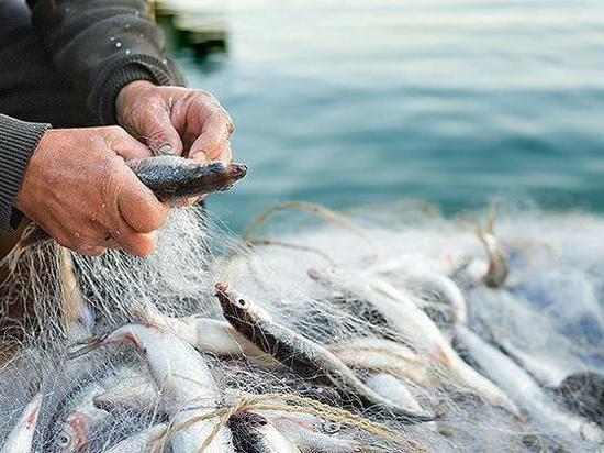 Орские рыбаки осуждены за незаконную ловлю рыбы в Ириклинском водохранилище