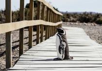 Смириться с тем, что вместо пингвинов пришлось общаться с морскими котиками, не смогли москвичи, отправившиеся в путешествие в Аргентину